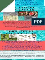 INFOGRAMA DE ORGANISMOS UNICELULARES Y PLURICELULARES.pdf