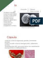 2e.Capsula (1).pdf