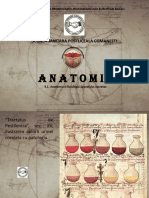 Anatomie curs 7