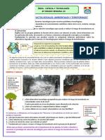 Ficha 4º Semana 24 CYT.....pdf