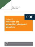 Protección a la maternidad y fuero laboral masulino.pdf