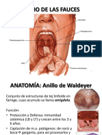 anatomaamigdalayfaringoamigpseudomembyvesiculosa-121014235753-phpapp01