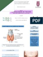 13. Tiroides generalidades.Exposición.pdf