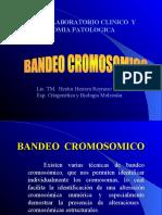 BANDEO  CROMOSOMICO