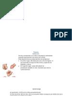 urologia.pptx