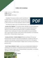 Cultivo_del_Arandano_1_[1]