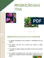 01_REP_PLANTAS_1.ppt
