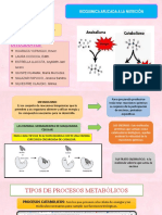 ppt bioquimica (1)
