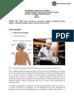 Valvula de Hakim.pdf