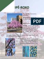 IPÊ-ROXO
