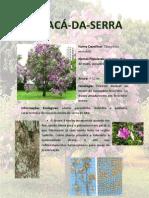 MANACÁ-DA-SERRA