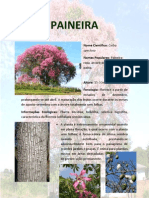 PAINEIRA