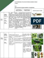 Cuadro granos andinos y leguminosas - JEYSON VASQUEZ .pdf