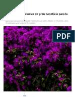 4 plantas medicinales de gran beneficio para la salud _ Mundo Sano _ Noticias e información para un estilo de vida saludable..pdf