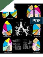 Lung Segmental Anatomy