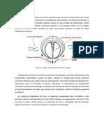 Keven Bello - Cavitação_removed.pdf