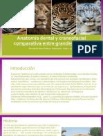Anatomía dental y craneofacial comparativa entre grandes felinos