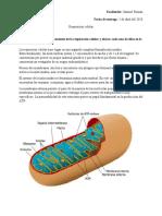 Bio respiración celular