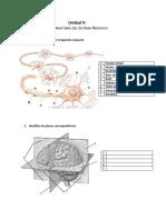 0102 Esquemas Unidad 2 Anatomía del Sistema Nervioso