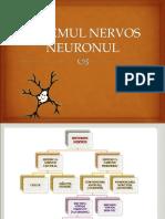 neuronul-1