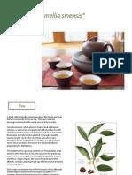 What is Tea.pdf