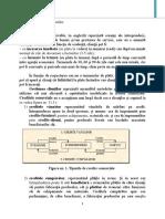 CURS AEF. Gestiunea clientilor 2019.pdf
