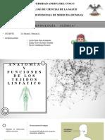 1 Anatomía y funciones de los tejidos linfáticos