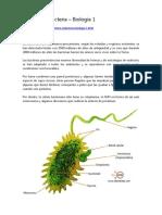 Dominio Eubacteria
