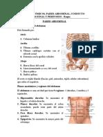 1. PLANOS ANATÓMICOS, PARED ABDOMINAL, CONDUCTO INGUINAL Y PERITONEO .docx