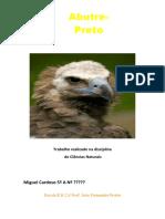 Abutre_Preto_Miguel_Cardoso