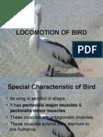 Locomotion of Bird