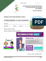 CONOCIENDO A LAS PLANTAS 3° G.pdf