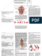 sistema circulatorio 2