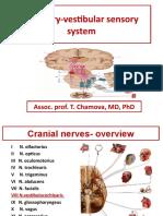 Vestibulocochlear Nerve (VIII)