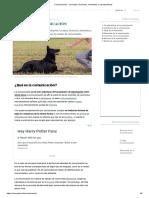 Comunicación - Concepto, funciones, elementos y características.pdf
