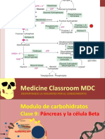Clase 10., Pancreas e insulina .pptx