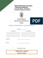 PRACTICA DE LABORATORIO 2, MITOSIS, GENETICA