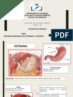 ESTOMAGO-DUODENO-ADENOCARCINOMA-ULCERAS-YEYUNO-ILEON-OBSTRUCCION INTESTINAL-ISQUEMIA-TROMBOSIS-TUMORES.pdf
