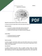 Defectos glaucomatosos y campo visual.docx