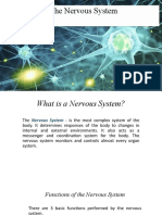 The Nervous System(edited)