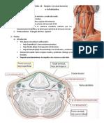 TEMA 24 - Región Cervical Anterior e Infrahioidea