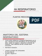sistema-respiratorio-plantas-medicinales800