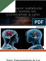 Corteza cerebral y hespecialización hemisferica 2.pptx