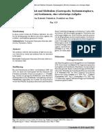 Nordsieck_Murellen 2011 kopie.pdf