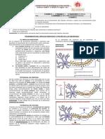 8_biologia_dubyarroyo_impulsonervioso_octavos