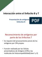 Interaccion linfocito t y b