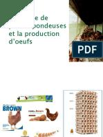 Production d'oeuf de consommation