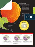 Human body _ a visual encyclopedia ( PDFDrive )-89-98