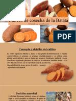 batata.pptx
