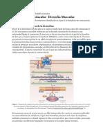 BM distrofia muscular_0686c2a5ebbf6e03b3390c95d960ddd6.pdf